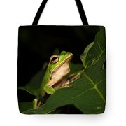 Emerald Eye Tree Frog Tote Bag