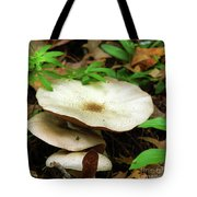 Emerging From The Undergrowth Tote Bag