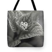 Emerging Hydrangea Tote Bag