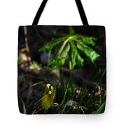 Emerging Mayapples Buffalo National River Tote Bag