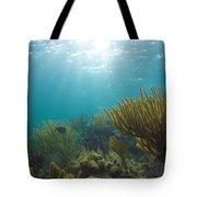 Enchanted Seas Tote Bag