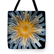 Ephyra Of A. Aurita Jellyfish, Lm Tote Bag