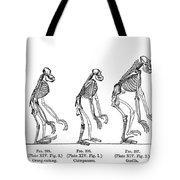 Ernst Haeckel, Evolution Of Man, 1879 Tote Bag