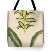 Euonymus Japonica Aurea Variegata, Maranta Micans Tote Bag