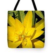 Euphorbia Wallichii Tote Bag