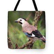 Eurasian Jay  Tote Bag