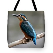 Eurasian Kingfisher Tote Bag