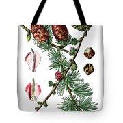 European Larch, Pinus Larix Tote Bag