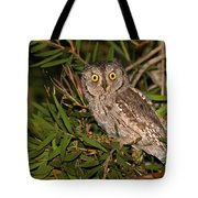 European Scops Owl  Tote Bag