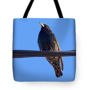 European Starling Trasparent Background Tote Bag