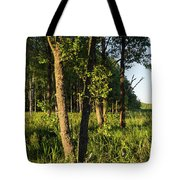 Evening In The Sunshine Tote Bag