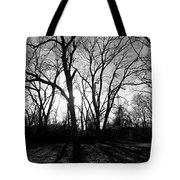 Evening Sun Through The Trees Tote Bag