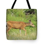 Evening Visitor 2 Tote Bag