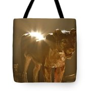 Evening's Light Tote Bag
