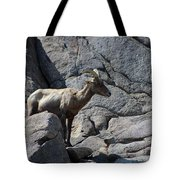 Ewe Bighorn Sheep Tote Bag