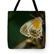 Exotic Butterfly On Tree Bark Tote Bag