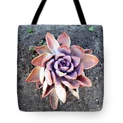 Exotic Succulent Plant - Pink Lilac Tote Bag