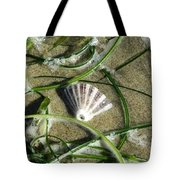 Exposed Shell Tote Bag