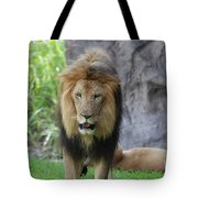 Expressive Male Lion Prowling Around In Nature Tote Bag