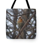 Eye-contact With The Rare - Orange Phase - House Finch Tote Bag