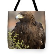 Eye Of The Golden Eagle Tote Bag