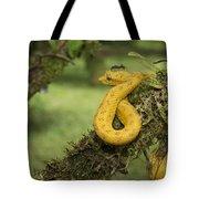 Eyelash Palm-pitviper Tote Bag