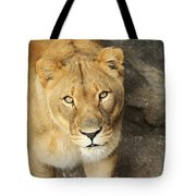 Eyes Of The Lioness Tote Bag