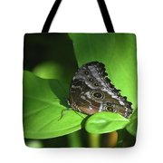 Eyespots On The Closed Wings Of A Blue Morpho Butterfly Tote Bag