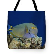 Eyestripe Surgeonfish Tote Bag by Dave Fleetham - Printscapes