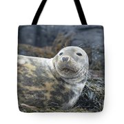 Face Of A Gray Seal Tote Bag