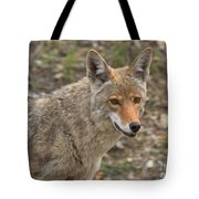 Face Of The American Coyote Tote Bag