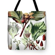 Fagus Sylvatica, The European Beech Or Common Beech Tote Bag