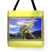 Falcon Being Trained H B With Decorative Ornate Printed Frame. Tote Bag
