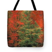 Fall Brilliance Tote Bag