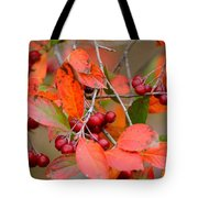 Fall Color 1 Tote Bag