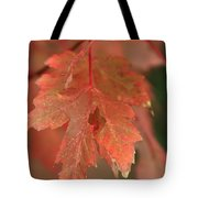 Fall Color In Softness Tote Bag