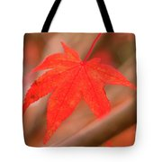 Fall Color Maple Leaves At The Forest In Kamakura, Kanagawa, Jap Tote Bag
