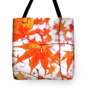 Fall Color Maple Leaves At The Forest In Kumamoto, Japan Tote Bag
