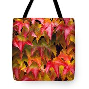 Fall Colored Ivy Tote Bag
