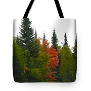 Fall Colors Are Starting Tote Bag