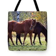 Horses Fall Grazing Tote Bag