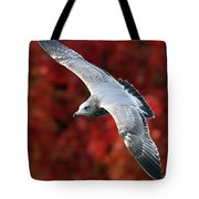 Fall Gull Tote Bag