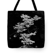 Fall Illumination In B/w Tote Bag