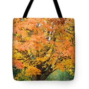 Fall Tree Art Print Autumn Leaves Tote Bag