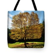 Fall Tree Silhouette Kent Falls State Park Connecticut Tote Bag