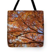 Fall Tree With Star Burst Tote Bag