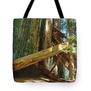 Fallen Redwood Trees Forest Tote Bag