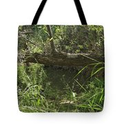 Fallen Tree In Peters Canyon Tote Bag