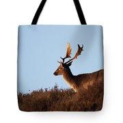 Fallow Buck Tote Bag