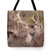 Fallow Deer Buck Tote Bag